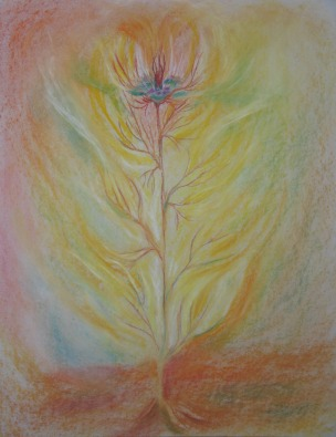 Nigella damascena - Love-in-the-mist