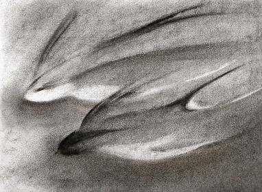 Swallows - charcoal 2
