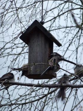 BIRD FEEDER 1A